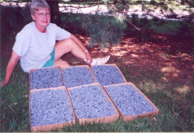 Al And Wilma Sprinkle's daughter Karen Shaw shows boxes of fresh blueberriees